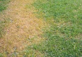 Irrigation Spot
